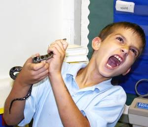 Cấp cứu khi trẻ bị rắn cắn