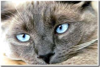 Tìm ra tổ tiên của mèo nhà