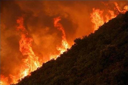 Hi Lạp: cháy rừng dữ dội