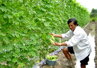 Ứng dụng khoa học công nghệ tạo sức bật cho sản xuất nông nghiệp