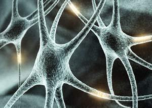 Quan sát sự phát triển tế bào não theo hệ thống thời gian thực