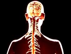 Cơ thể vẫn sống khi khuyết đầu!