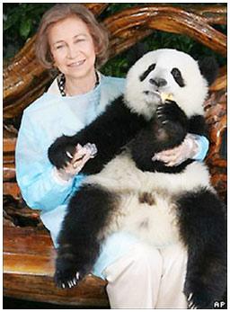Trung Quốc - Tây Ban Nha hợp tác bảo tồn gấu trúc