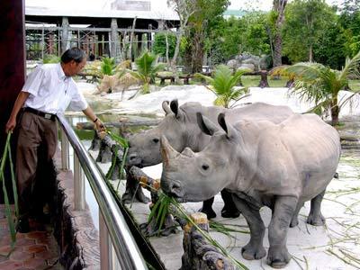 Sự thật về những con tê giác và sư tử trắng ẩn cư ở Bình Dương