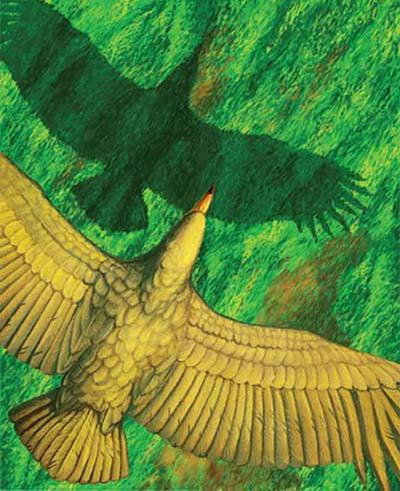 Chim khổng lồ bay như thế nào?