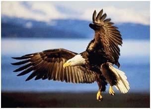 Chim không tuân theo quy luật động học thông thường