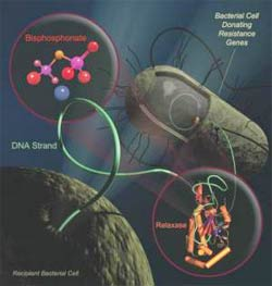 Thuốc trị loãng xương có thế khắc chế vi khuẩn kháng thuốc