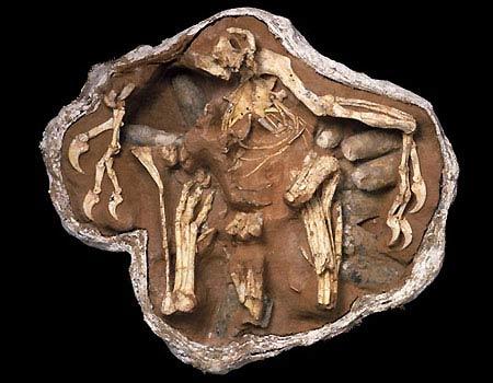 Hoá thạch của một con khủng long đang ấp trứng.