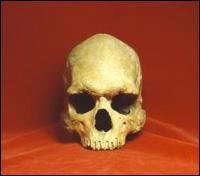 Người hiện đại có chung nguồn gốc từ châu Phi