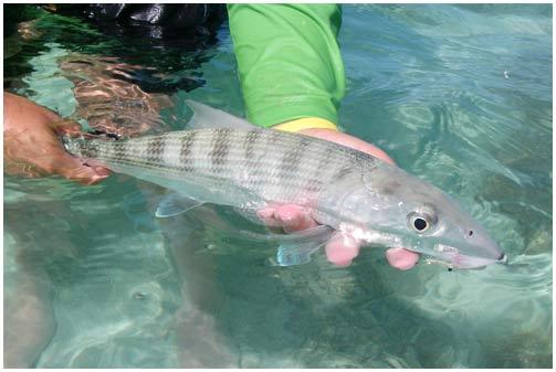Câu cá giải trí khiến cá tổn thương nặng