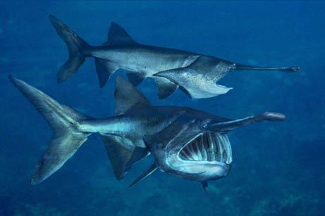 """Những con cá nước ngọt """"thành tinh"""""""