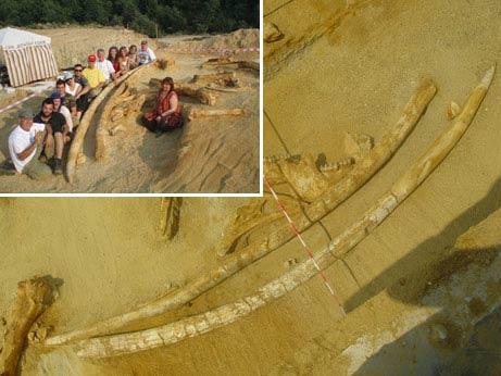 Phát hiện ngà voi khổng lồ hơn 2 triệu năm tuổi