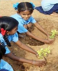 Ấn Độ: 10 triệu cây xanh trong 1 ngày