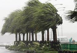 Nhật Bản hủy 128 chuyến bay vì bão