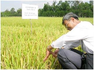 Ứng dụng kỹ thuật điện di protein SDS-PAGE cải thiện và nâng cao phẩm chất các giống lúa