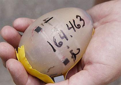 Ấp chim bằng trứng điện tử