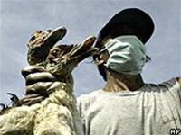 Indonesia: Thêm hai người tử vong vì cúm gia cầm