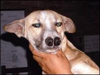Chó 2 mũi ở Bolivia