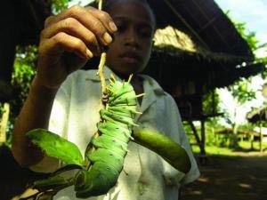 Tính đa dạng sinh học của rừng nhiệt đới cho thấy có nhiều mô hình khác nhau
