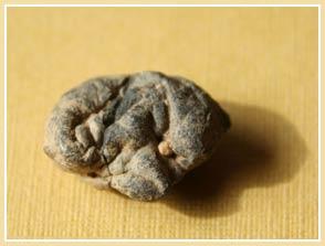 Phát hiện bã kẹo cao su cổ xưa nhất thế giới