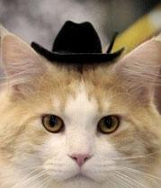 Mèo chỉ nhớ được trong 10 phút