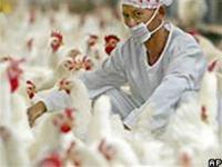 WHO: Bệnh truyền nhiễm lây nhanh trên toàn cầu