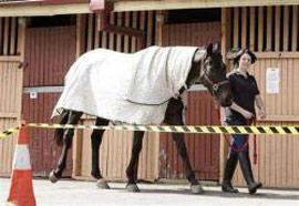 Cúm ngựa bùng phát ở Úc