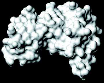 Trên 50% phụ nữ nhiễm siêu vi HPV