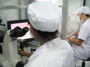 Việt Nam: Chuẩn bị ghép tế bào gốc tái tạo mô da