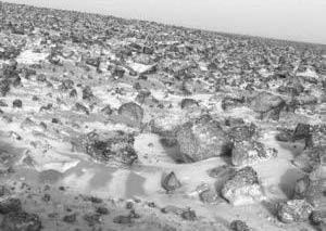 Đất sao Hỏa có thể có vi khuẩn sống