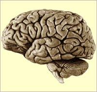 Phát hiện oestrogen ngăn ngừa chứng thoái hóa não