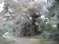 Chiếc mạng nhện khổng lồ bí ẩn