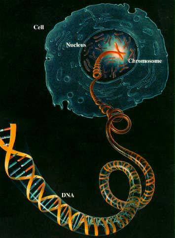 Điều phức tạp mới được phát hiện trong hệ gien người
