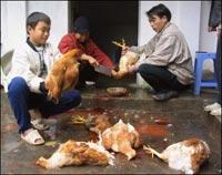 Việt Nam chưa phát hiện H5N1 lây từ người sang người