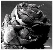 Các nhà khoa học thực hiện nghiên cứu với chuỗi gien hình nón