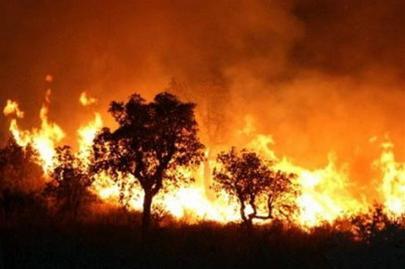 Cháy rừng ở Algeria