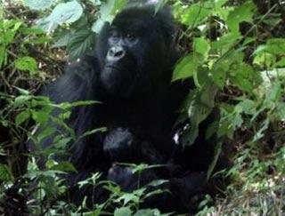 Hơn 16.300 loài có nguy cơ tuyệt chủng