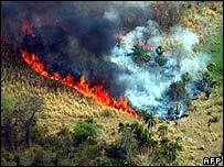 Cháy rừng, Paraguay ban bố tình trạng khẩn cấp