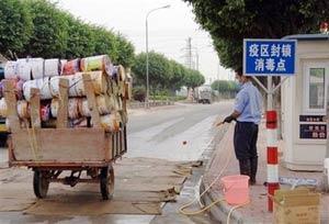 Trung Quốc xác nhận cúm gia cầm bùng phát ở Quảng Đông