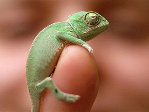 Những sinh vật nhỏ bé đáng yêu