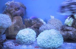 Đà Nẵng: Bảo tồn rạn san hô, hệ sinh thái vùng biển