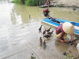 Hà Lan-Việt Nam triển khai chương trình khai thác nước bền vững