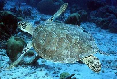 Hé lộ nơi ẩn náu bí mật của rùa biển