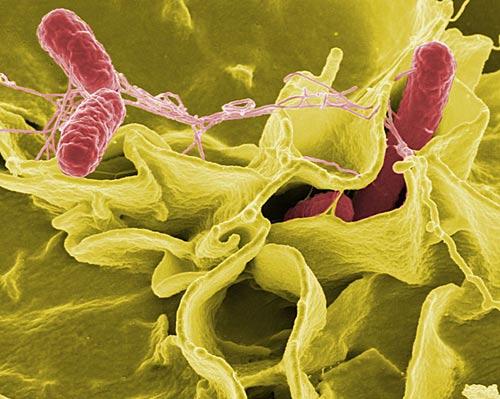 Vi khuẩn độc hơn khi bay vào vũ trụ