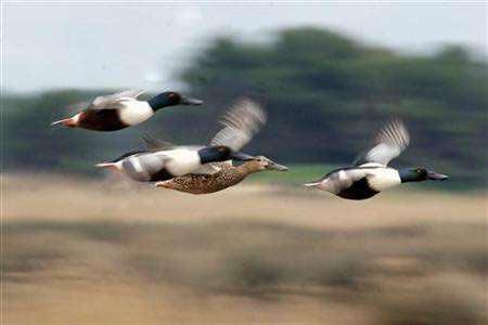 """Chim di cư có thể """"nhìn thấy"""" từ trường trái đất"""