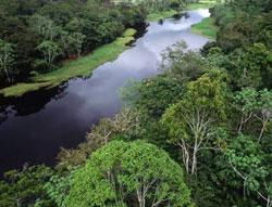 Rừng Amazon tươi xanh hơn khi nắng hạn!