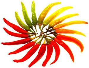 Dùng ớt để bào chế thuốc gây tê