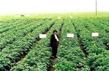Thái Bình: Bảo quản khoai tây giống bằng kho lạnh mang lại hiệu quả kinh tế cao