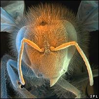 Voi còn sợ ong hơn sợ chuột