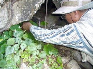 Núi đá vôi Kiên Giang - vốn quí về đa dạng sinh học